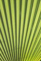 Texture: Green Leaf Texture