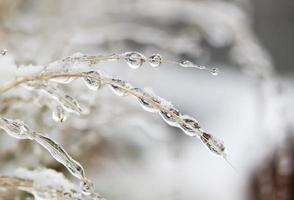 Frozen water drops photo