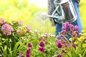 regando flores en el jardín