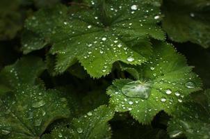 gota de água na folha