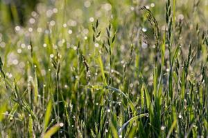water drops on the grass photo