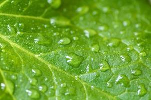gotas de agua de la hoja