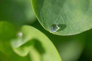 gota de agua en la hoja