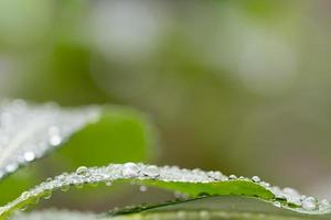 Gotas de agua sobre fondo de hojas.