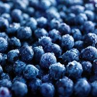 fresh blueberries with water droplets