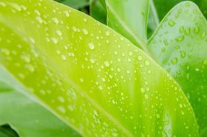 Water drops on a green leaf photo