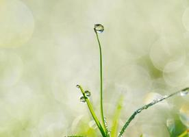 water drops on the green grass photo