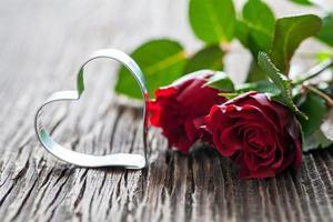 rosas rojas foto