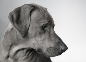le portrait de chien