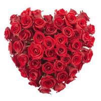dia de san valentin corazon rosa roja foto