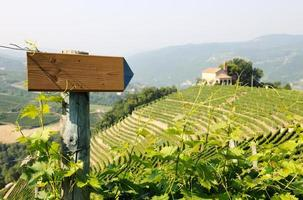 direction sign in the vineyards
