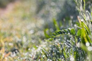 gotas de agua sobre la hierba
