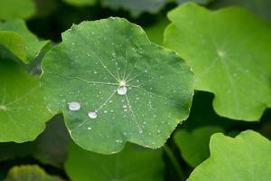 The drops of water on the leaves