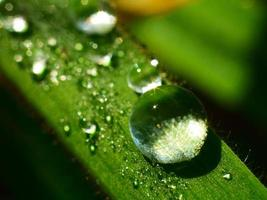 Water drop on a green grass leaf photo