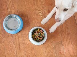 Dog with food and water dish