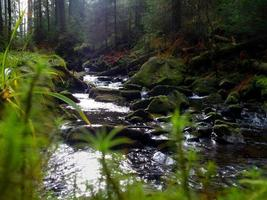 Creek in the woods photo
