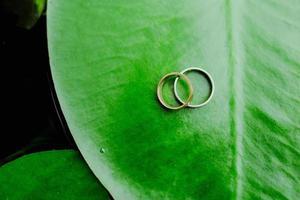 alianças de casamento em uma folha verde
