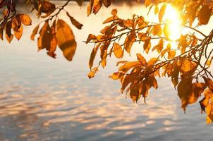 Golden autumn leaves on a background of water
