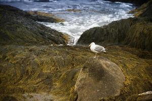 gaviota posada en la orilla foto
