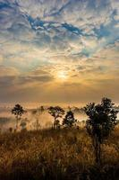 Morning in savannah