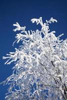 árvore nevado
