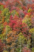 colores de otoño en las montañas