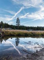 Large pine tree being reflected in a river photo