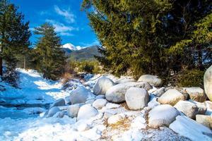 Green pine trees and white snow peak of the mountain
