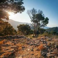 Bright summer morning landscape with dry trees. Montenegro