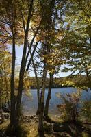 Trees on shore of Russell Pond near Lincoln, New Hampshire.