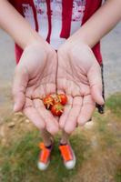 The young woman hands holding fresh cherry tomatoes photo
