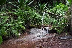 Bamboo Water Feature photo