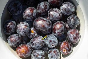 Bowl of plums in water photo