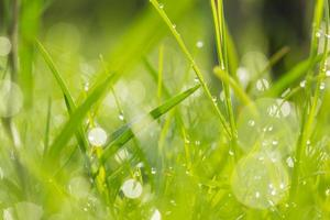Water drops on grass photo