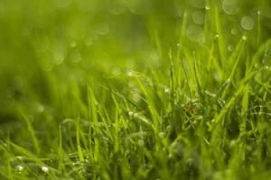 gota de agua sobre la hierba verde