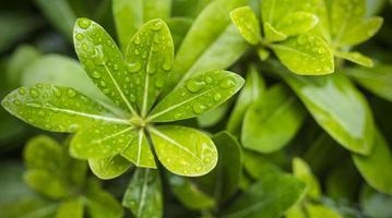 folha verde com gotas de água para o fundo