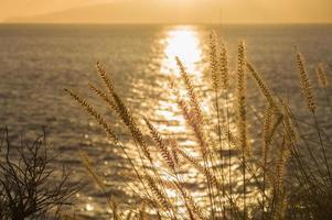 Seashore grass closeup at sunset