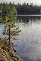 pine on the edge