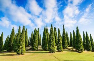 Kieferngrüner Garten