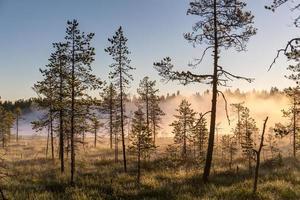 Morning fog over the marsh