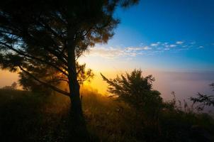 sun light effect and tree pine in the mountain photo