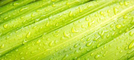 gota d'água nas folhas verdes