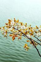 Orchid - white flowers with lake water.