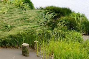 ola de hierba verde en la playa