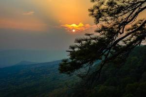 Branch of pine tree with sunset.