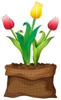 hermosa flor en bolsa marrón