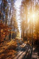 Tall trees in the autumn forest