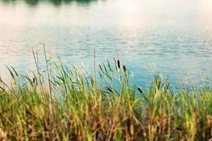 plantas a orillas del lago en otoño