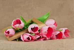 Bouquet of pink tulips with satin ribbon and wooden frame photo
