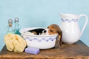 cachorro soñoliento en el lavabo foto